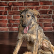 Brown Mixed-Breed Dog — Stockfoto #19802035