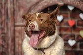 白い犬と太い赤 — ストック写真