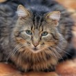 Fluffy cat — Stock Photo #23401698