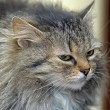 Fluffy cat — Stock Photo #23401952