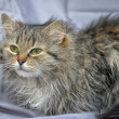 Fluffy cat — Stock Photo #23405762