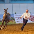 International Horse Exhibition — Stock Photo #25162589