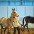 International Horse Exhibition — Stock Photo #25162641