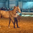 International Horse Exhibition — Stock Photo