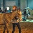 International Horse Exhibition — Stock Photo #25162729