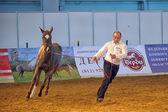 Internationell häst utställning — Stockfoto