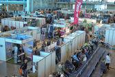 International Horse Exhibition — Stock Photo