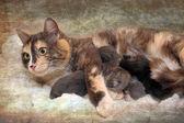 Mama cat with kittens — Stock Photo