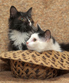 Cute kittens in a basket — Stock Photo