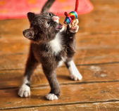 Kitten playing with a thread mouse — Stock Photo