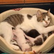 Cat with kittens — 图库照片 #27696069