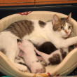 Cat with kittens — Stockfoto