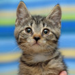 Portrait of a cute tabby kitten — Stock Photo