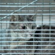 Gray cat sitting in a cage — Stock Photo