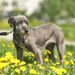 Portrait of a dog on the grass — Stock Photo #28042127