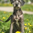 Portrait of a dog on the grass — Stock Photo #28043263