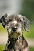 Retrato de cachorro sobre um fundo verde — Fotografia Stock