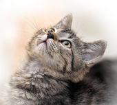 Portrait of a striped cat — Stock Photo