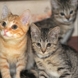 Cute kittens on the couch — Stock Photo #28396497