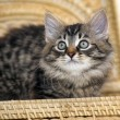 Foto Stock: Kitten in basket