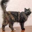 Stock Photo: Fluffy tortoiseshell cat