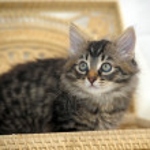 Kitten in basket — Stock Photo #30571605