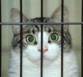 Retrato de um gato em uma gaiola — Fotografia Stock