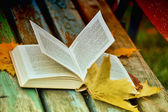 Book and autumn leaves — Stock Photo