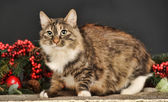 Tabby cat with red Christmas decorations — Photo
