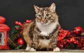 Tabby cat with red Christmas decorations — Stock Photo