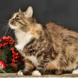 Stock Photo: Tabby cat with red Christmas decorations