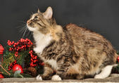 Tabby cat with red Christmas decorations — Стоковое фото