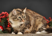 Tabby cat with red Christmas decorations — Stok fotoğraf