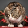 Tabby cat with red Christmas decorations — Стоковая фотография