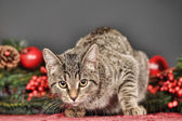 Tabby cat with red Christmas decorations — Zdjęcie stockowe