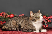 Tabby cat with red Christmas decorations — ストック写真
