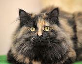 ふわふわトラ猫 — ストック写真