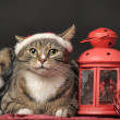 Cat in a Christmas santa hat and a flashlight, candle holder — Stock Photo