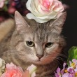Cat among the flowers studio — Stock Photo