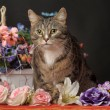 Cat among the flowers — Stock Photo