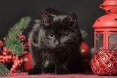 Cat among the flowers studio — Stockfoto