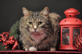 Cat and lantern — Stock Photo
