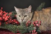 Décorations de Noël et de chat — Photo
