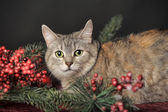 Cat and Christmas decorations — Stock Photo