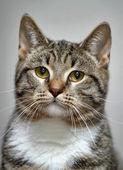 猫的肖像 — 图库照片