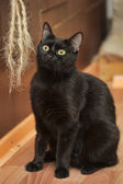 Black cat relaxing — Stock fotografie