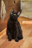 Black cat relaxing — Stockfoto