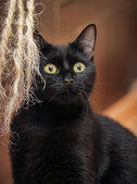 Black cat relaxing — Foto de Stock