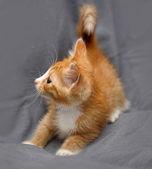 Krásné koťátko kočka — Stock fotografie