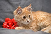 Portrait of a cute little red cat — Stock Photo